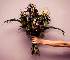 hand-dead-flowers-woman-s-holding-bouquet-43925935