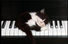 catmusic