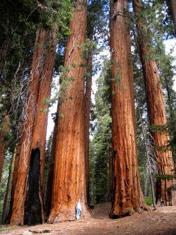 sequoia-np-27